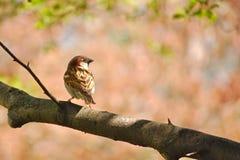 Птица на лимбе Стоковые Фото