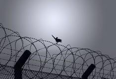 Птица на колючей проволоке Стоковая Фотография