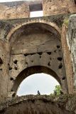 Птица на Колизее, Рим, Лацио, Италия Стоковое фото RF