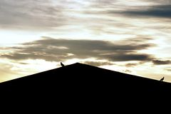 Птица на крыше с предпосылкой захода солнца Стоковые Фото