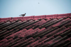 Птица на крыше Стоковое Изображение