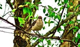 Птица на лимбе стоковые изображения
