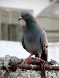 Птица на моей крыше Стоковые Фото