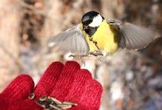 Птица на моей руке Стоковое Изображение