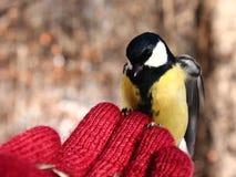 Птица на моей руке Стоковая Фотография RF