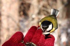 Птица на моей руке Стоковое фото RF