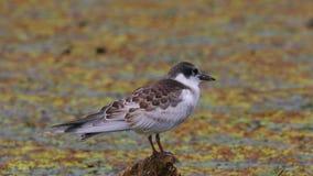 Птица на озере видеоматериал