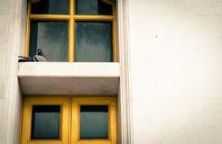 Птица на окнах рамки Стоковое Фото