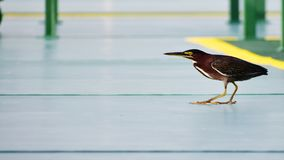 Птица на палубе стоковые фото