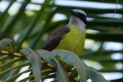 Птица на пальме стоковое фото rf