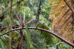 Птица на парке Caldeira Velha на острове Sao Мигеля, Португалии Стоковые Изображения