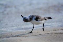 Птица на песке стоковое изображение