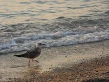 Птица на побережье Стоковая Фотография
