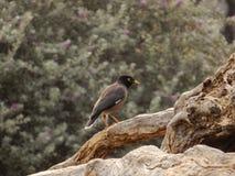 Птица на положении дерева бесполезном стоковое изображение