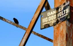 Птица на полюсе Стоковое фото RF