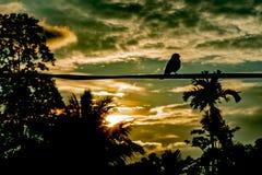 Птица на проводе стоковое фото rf