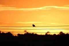 Птица на проводе Стоковые Изображения RF