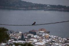 Птица на проводе Стоковые Фотографии RF