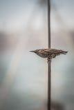 Птица на проводе Стоковые Изображения
