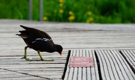 Птица на солнечный день около озера Стоковая Фотография RF