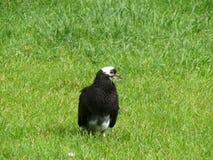 Птица на траве Стоковые Фотографии RF