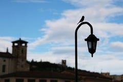 Птица на уличном фонаре стоковое фото rf