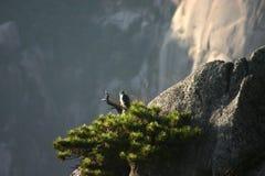 Птица на утесе стоковые изображения