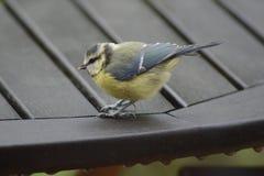 птица немногая Стоковое Фото