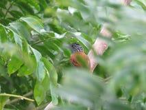 птица немногая Стоковое фото RF