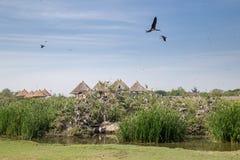 Птица-носорог была идущ и летающ в мир сафари Стоковые Изображения RF