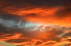 Птица огня Стоковые Изображения