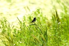 птица одичалая Стоковое Изображение