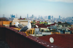 Птица около Hagia Sophia на Стамбуле, Турции Стоковая Фотография