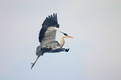 птица освобождает небо Стоковая Фотография RF
