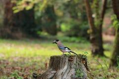 Птица отдыхая на пне стоковые изображения rf