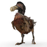 Птица додо Стоковые Фотографии RF