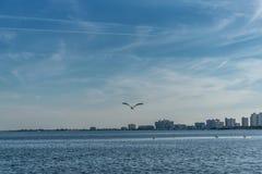 Птица пеликана летания в пляже Clearwater, Флориде Стоковое фото RF