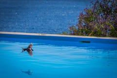Птица плавательным бассеином для питьевой воды стоковые фото