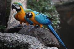 птица попугая ары в Таиланде Стоковое Фото
