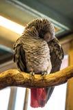 Птица попугая малая на телефоне Стоковые Фото