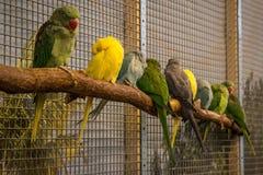 Птица попугая малая на телефоне Стоковое Изображение
