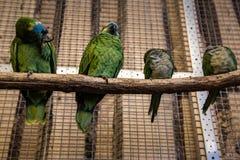 Птица попугая малая на телефоне Стоковые Изображения