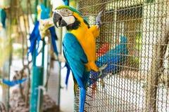 Птица попугая сидя на клетке Стоковые Изображения RF