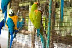 Птица попугая сидя на клетке Стоковая Фотография