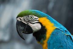 Птица попугая стоковое фото rf