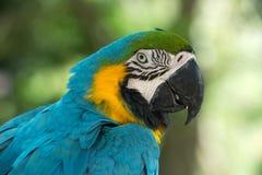 Птица попугая стоковые изображения