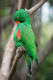 Птица попугая Стоковое Изображение