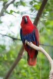 Птица попугая стоковая фотография