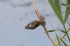 Птица получая готовый нырнуть Стоковое Изображение RF