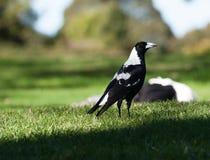 Птица приземляется на траву Стоковые Фото